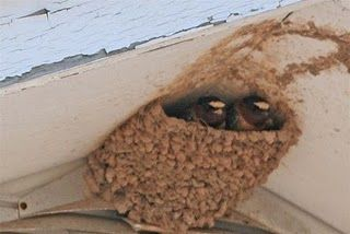 Their mansion in the eaves!...