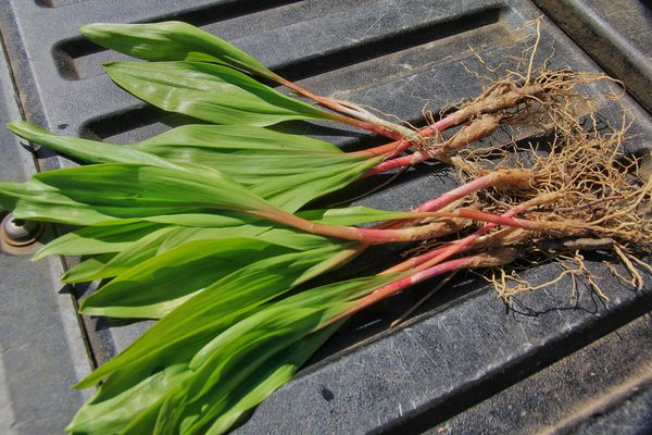 Young ramps...the season will over early next week...
