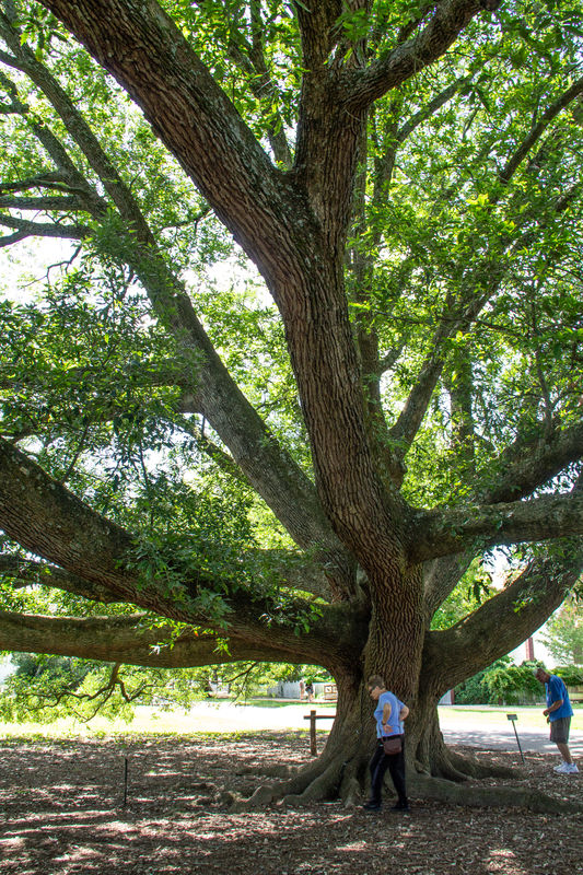 I love big, ole trees.......
