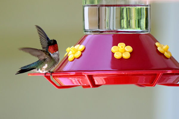 Love our Hummers!...