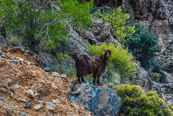 7 - Lord of the Rocks: this goat might be wonderin...