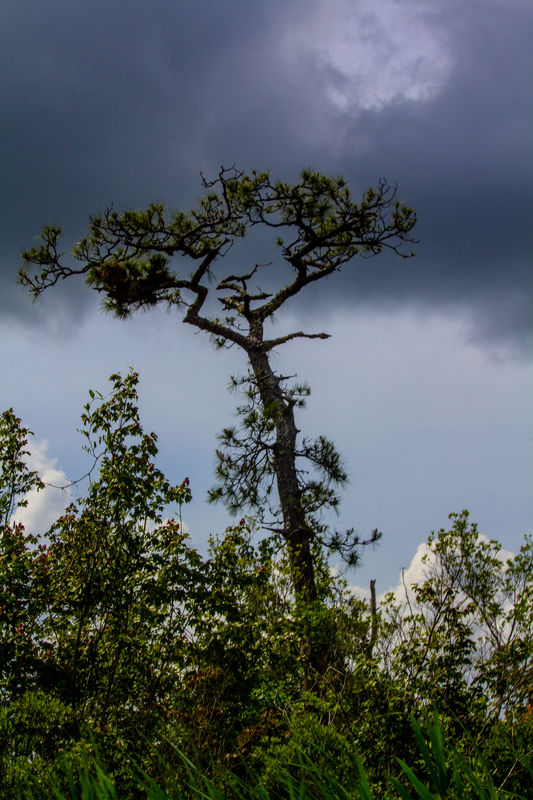 The unusual tree and the dark clouds make for a sp...