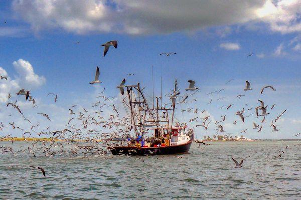 Shrimp Boat...