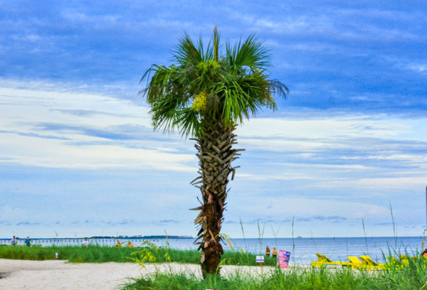 Look Ethyl a Palm Tree...