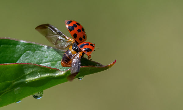 Ladybug Takeoff...