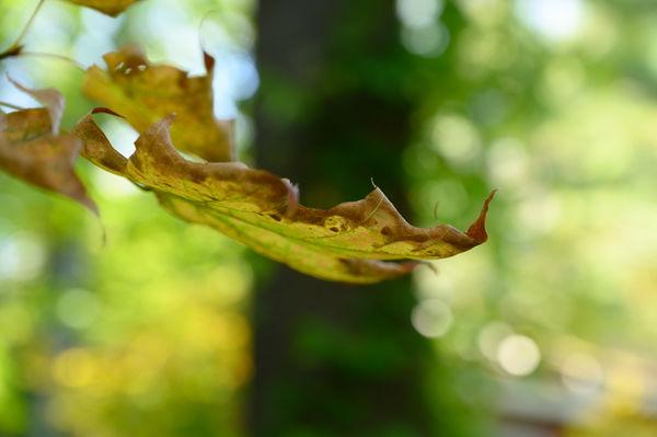 Life (Leaf) On The Edge...