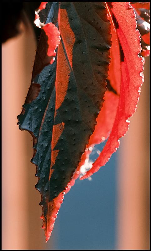 5. Crimson and shadows...