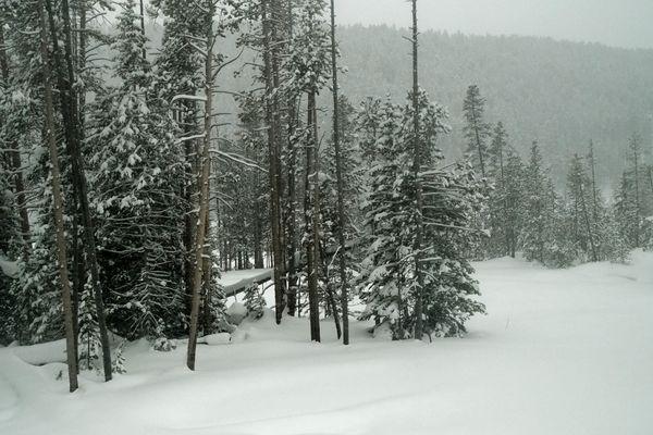 "....let it snow, let it snow, let it snow.""..."