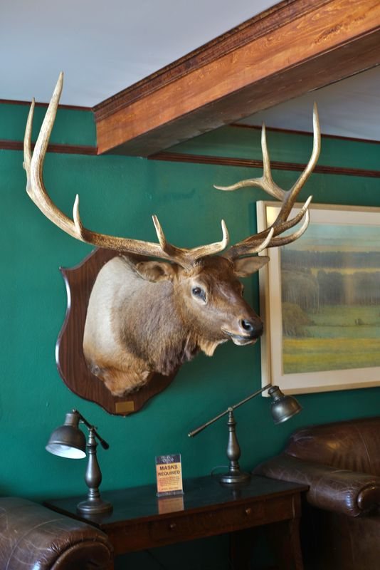 Elk are a big thing all over up there.  They're ha...