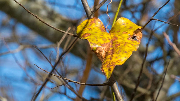 Found a couple of heart shaped leaves the other da...