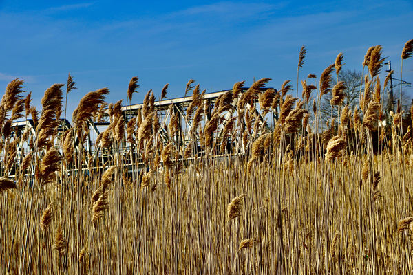 More weeds from Old Lyme-loving the texture they s...