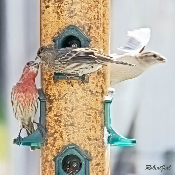 The sparrow flies off to find a quiet place to eat...