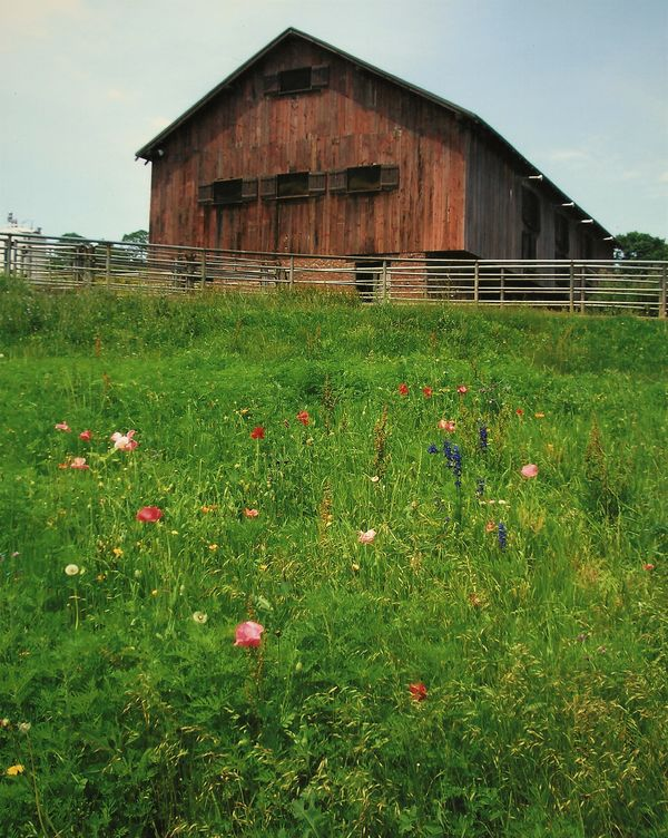 (1) Barn spotted early Spring during one of our ro...
