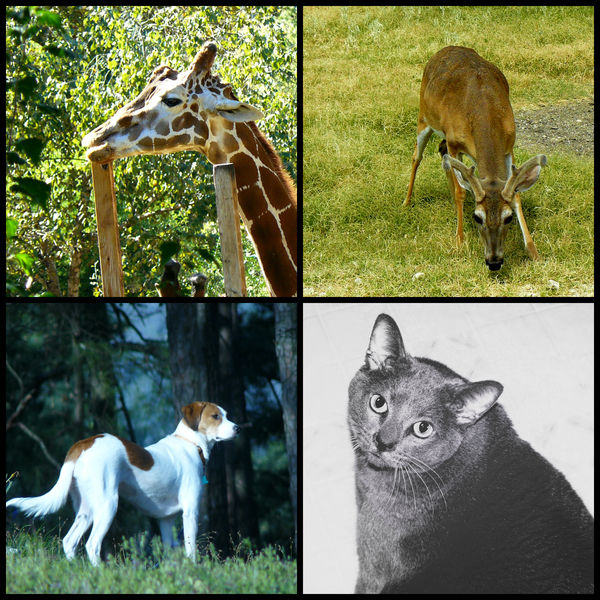 Animals - Creatures Great and Small...