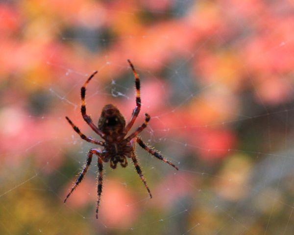 Arachnid...
