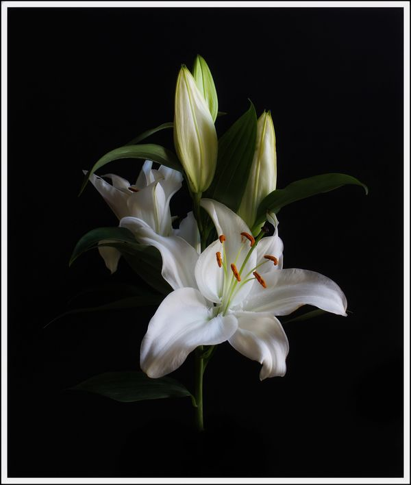 Lily...