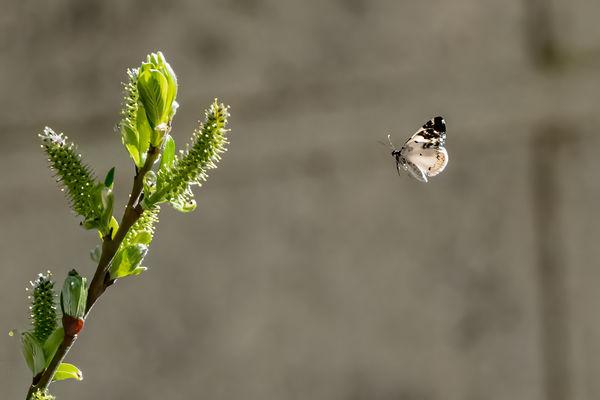 #7 Mystery Moth...