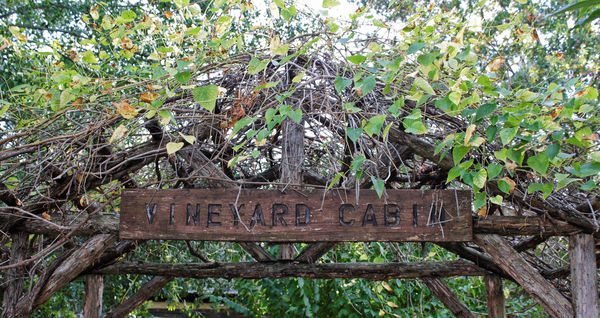 Top of a Vine covered Arch...