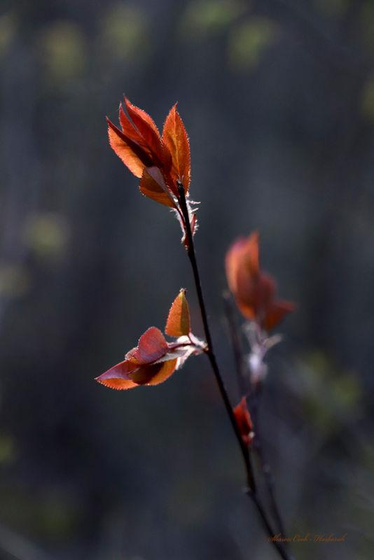 Budding leaf...