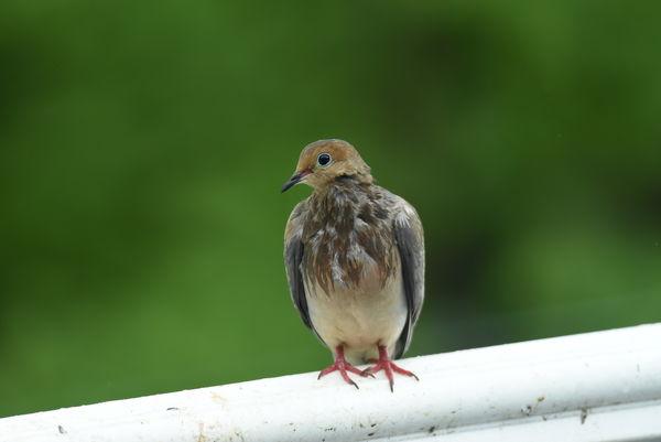 Unusual bird (at least around here)...