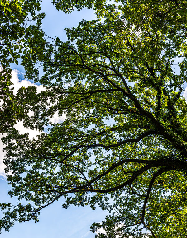 10 -  Beautiful tree canopy...