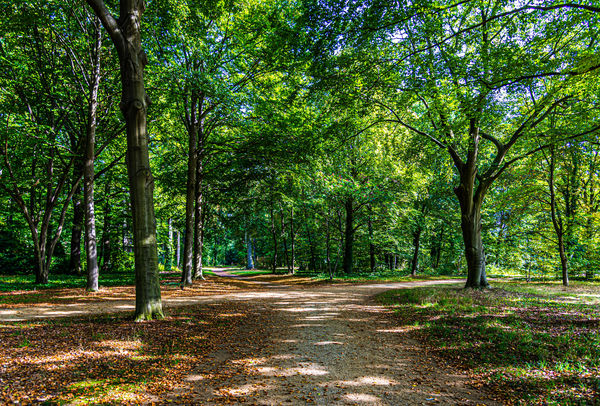 1 - Shady paths encourage a stroll in the wooded a...