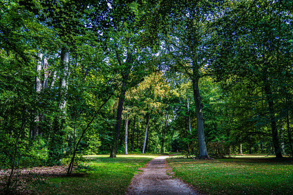 2 - Another forested park scene...