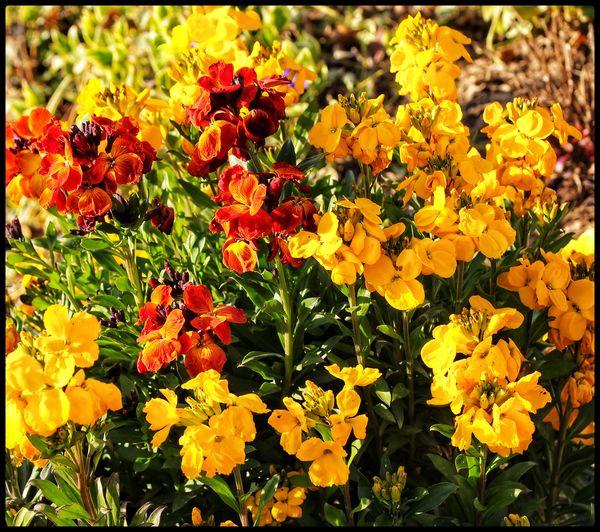 Wallflowers...