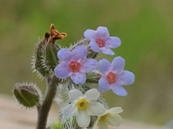 This is zoomed in to 10X. These tiny flowers are n...