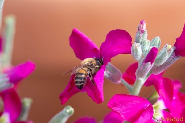 OOC, no flash, spot meter on Bee, a cloudy day wit...