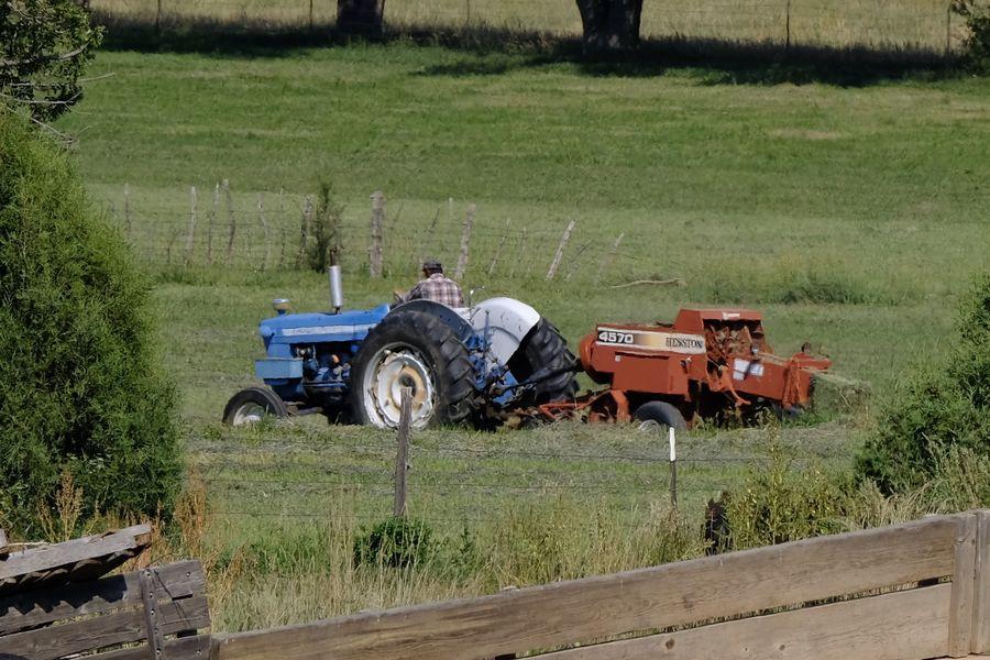 Neighbor balling hay (weeds?)...