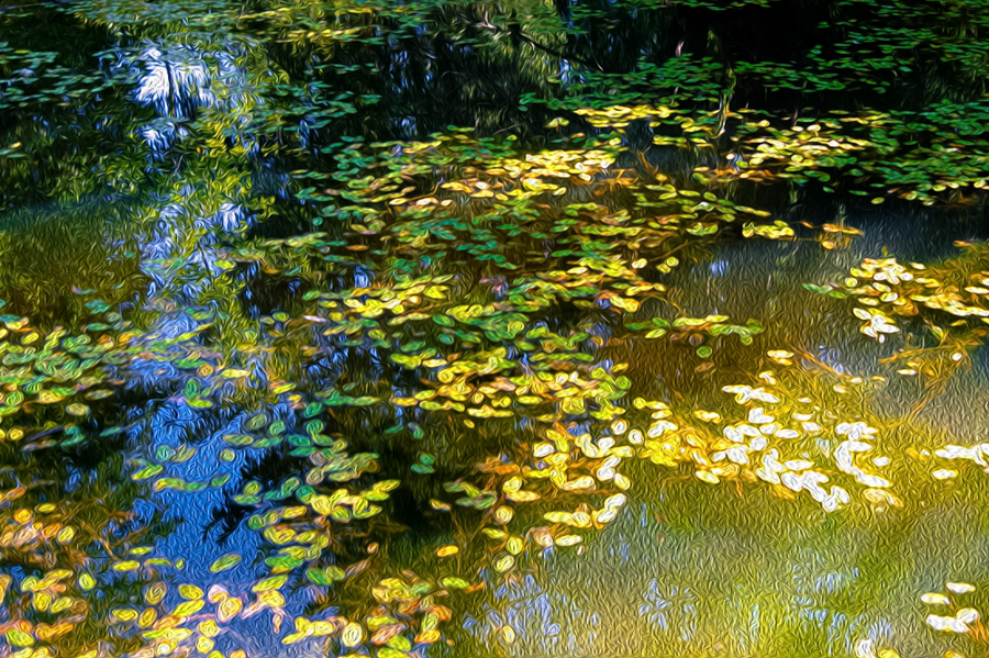 Leaves in a pond in a huge Portland Cemetery...